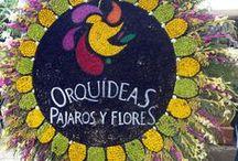 Orquideas, Pájaros y Flores.                Orchid, Bird and Flowers / Feria de las Flores, Medellín, Colombia, 2015