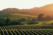 Wine Travel!