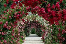 Flores, plantas y jardines
