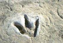 Prehistoric Creatures & Fossils