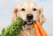 Pets / All about pets including tips and tricks for proper care.