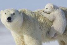 polar bear / by Naoko Helen Oshika