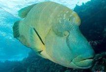 Middle Reef / Site de plongée