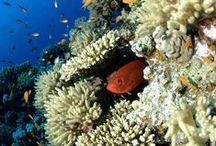 Gamul Soraya / Near Sandy island & Safaga island, a reef full of life (60mx80m).