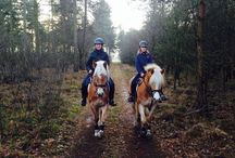 Haflingers / Beautiful horses. Our two haflingers Silver and Zhiva