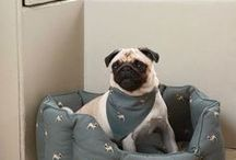Animal Magic / A collection of animal inspired fabrics, quirky pet toys for your furry or feathered friends.