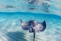 포토 :: 수중동물 / 수중식물