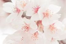 Blooming Blossoms / Beautiful, blooming, spring time, blossom inspiration for interiors. Colours, fabrics, and accessories for your home interiors.