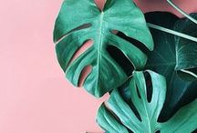 Design trend - Tropical / Tropical decor, green and pink colours in dominance, large botanical plants, prints, flamingoes, pineapples, zingy, monstera. leafy, prints. Tropic inspired rooms.