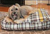 Giveaways & Contests / Giveaways & contests featuring some of our favorite pet products!