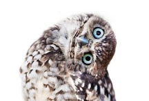 Just Owls / I have a fascination with owls... I even have a tattoo of one