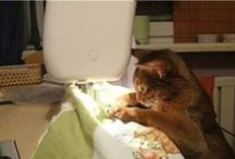 keep on stitchin' -fun / Sewing related funnies
