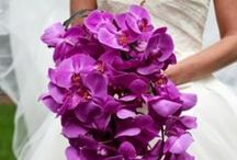 2014 PANTONE Color of the YEAR ~ radiant orchid / by Tupper Manor