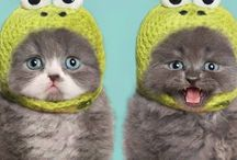 Adorable Animals  / Animal pictures and gifs to make you smile when you feel sad / by Michelle Dudra