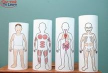 Basic Anatomy & Body Systems / Science activities for preschool, kindergarten, 1st grade, and home school.