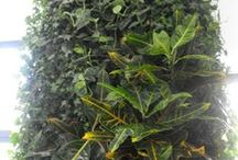 Green Walls @ Clinica dentara DipaDent / Green Walls @ Clinica dentara DipaDent