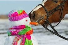 Holiday Horse Treat Recipes / Show some love to your horses this holiday season!
