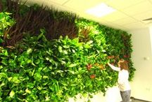 Green Walls @ Allianz / Green Walls @ Allianz
