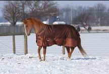 Horse Wear / Everything from blankets and neck covers to fly masks and tail bags in colors and prints to fit every style!