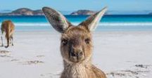 Australia / Maximize your vacation to Australia with these Australia travel tips including Sydney, Melbourne, Brisbane, Gold Coast, and Cairns.