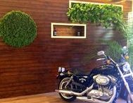 Green Walls @ Jack Daniel's / Plants & Reindeer Moss
