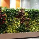 Green Walls @ S-Park
