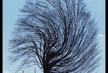 alberi alberi alberi