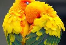 Mother natures creations / Mother natures creativity in everyone's eyes