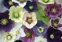 :: flowers ::