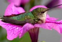 Birds / by Suzanne Faulkner