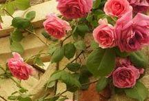 Gosto de flores / Flores,de todos os tipos e de todas as cores.Rosas,margaridas,flores do campo,orquídeas,lírios,copos de leite...
