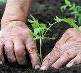 Gardening / work, tools, sheds... 'Everything except gardening is futile'