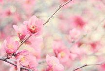 HOME | Gardening | Plants & Flowers