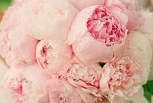 LA VIE EN ROSE / Quand il me prend dans ses bras il me parle tout bas, je vois la vie en rose.