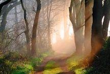 drzewa trees, lasy / Malowane akwarelą drzewa, lasy,itp