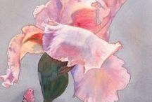 Iris / Akwarela kwiaty