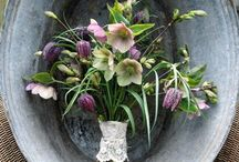 New flower obsession - Hellebore!