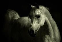 Horses / by Gaena