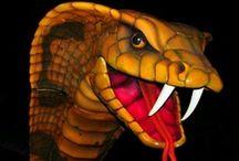 Snake's / by Sharyn K