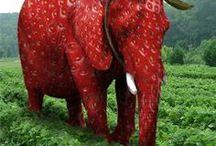 Strawberry / Zo valt een olifant niet op tussen de aardbeien !
