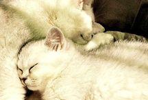 Cute animals / Собаки и кошки отчего-то разбираются в людях лучше самих людей (с)