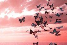 Lovely butterfly / Бабочки — самые эфемерные и самые прекрасные существа на Земле. Откуда-то появляются, тихонько проживают свои крохотные жизни, не требуя почти ничего, а потом исчезают, наверное, в какой-то другой мир... Совсем не такой, как наш. Х.Мураками
