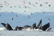 Alaskan Wildlife / The wild side of Ketchikan.
