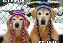 Cold Weather Jokes & Quotes / Cold Weather Jokes & Quotes by Weather Trends International: The global leader for YEAR-AHEAD weather forecasting. We hope enjoy this collection. Help yourself to anything you like. Jody
