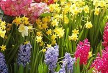 Spring /  Spring by Weather Trends International: The global leader for YEAR-AHEAD weather forecasting. We hope enjoy this collection. Help yourself to anything you like. Jody