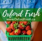 Oxford Fresh / Oxford Fresh is a group of chefs, growers and processors and they are hooked on flavour! Our chefs are hungry to create a cuisine based on food full of unique, Oxford flavour.