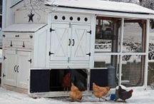 Chicken Villas / by Dman Wolf