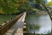 Our Neighborhood / We live in the most beautiful part of North Carolina! Take a look at our local culture.