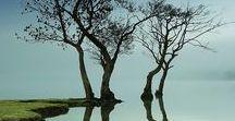Beautiful Trees: Tree-studies