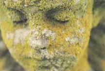 Lichen / Naava : Tree Lichen
